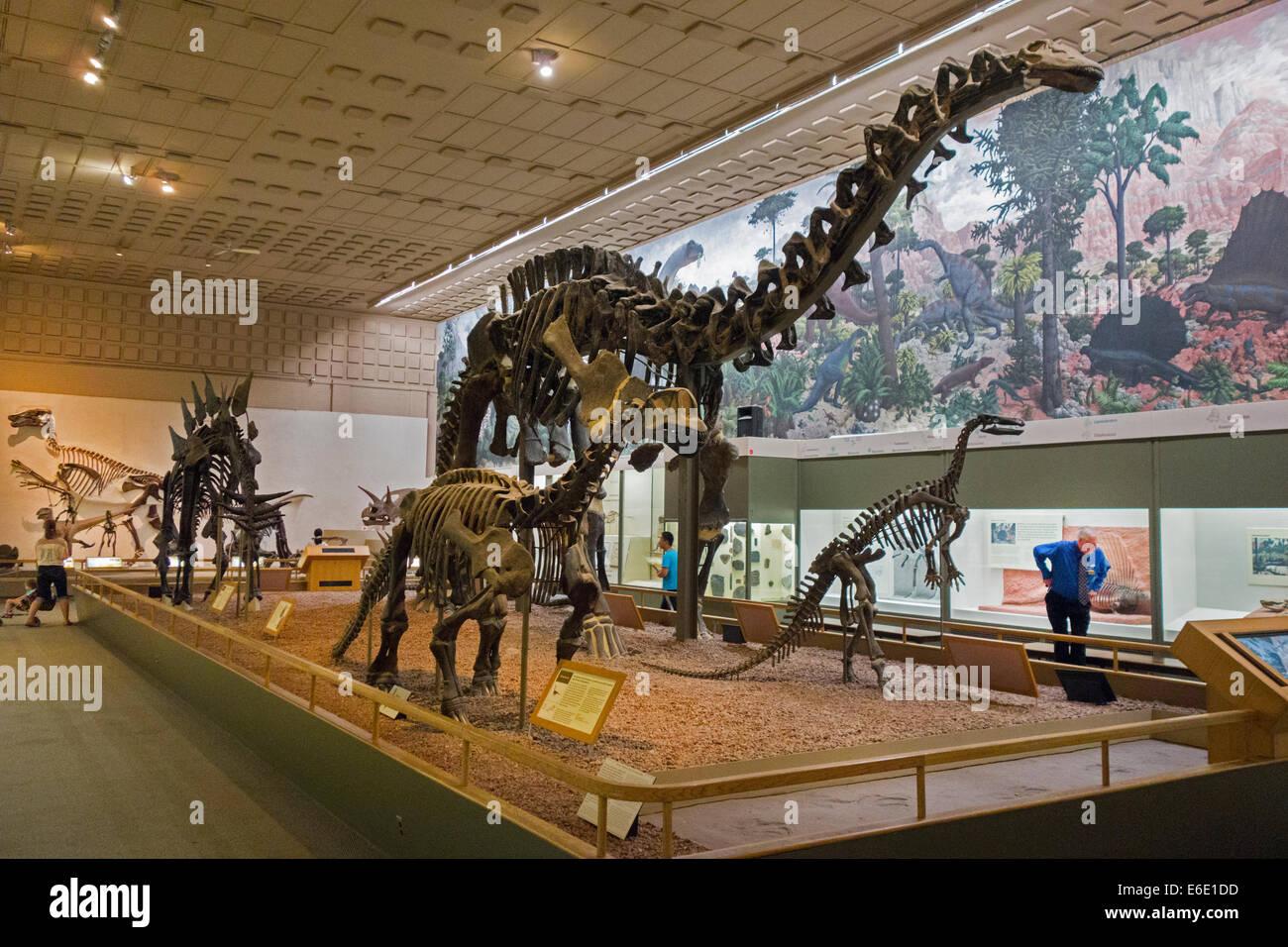 New Dinosaur At Museum Of Natural History