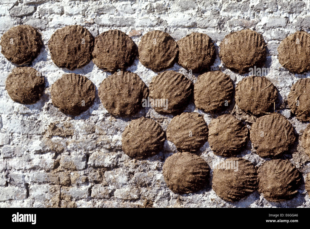 Cow dung for use as fuel dries on the wall of a farm house ...