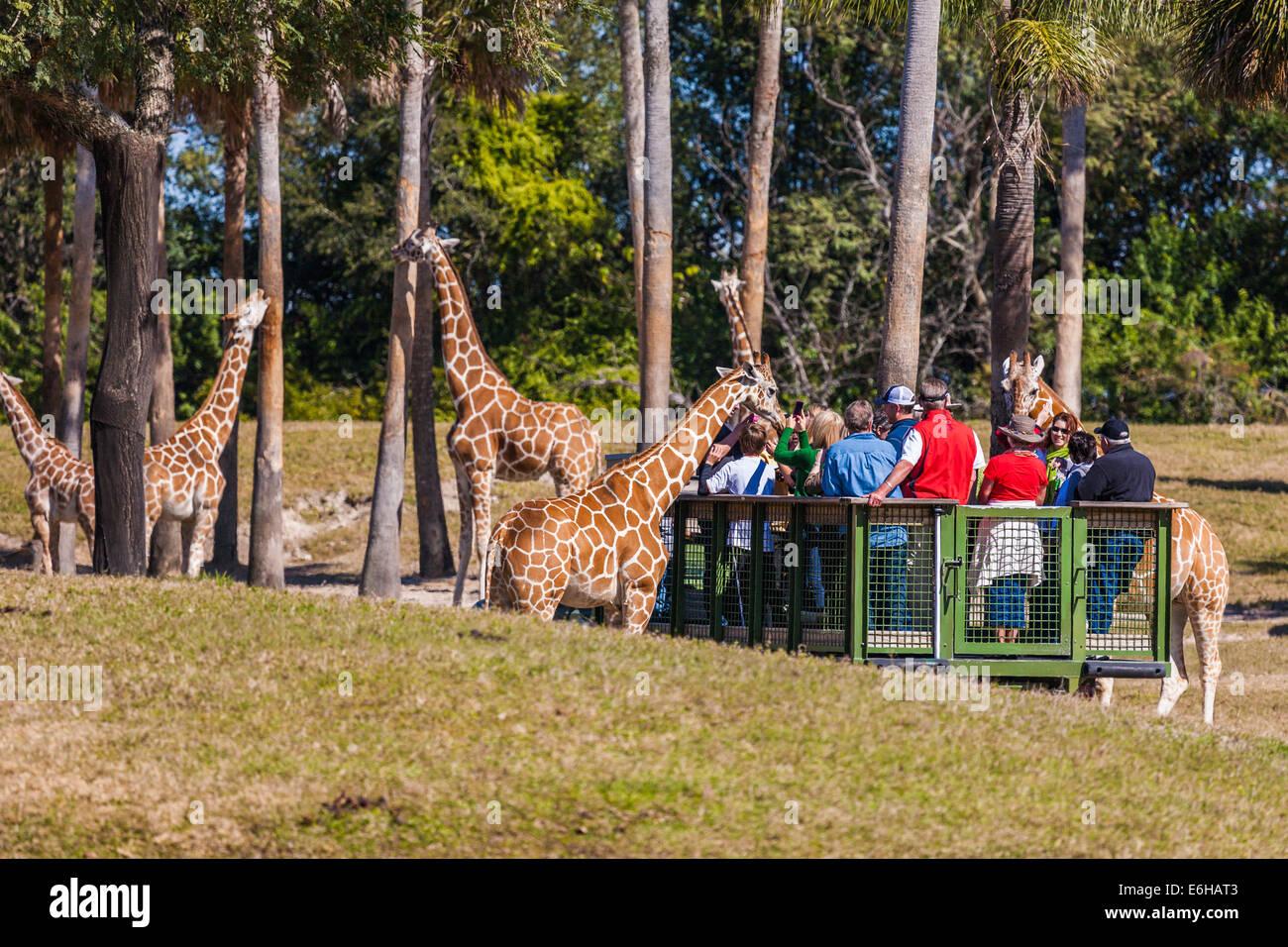 Busch Gardens Animal Tours Garden Ftempo