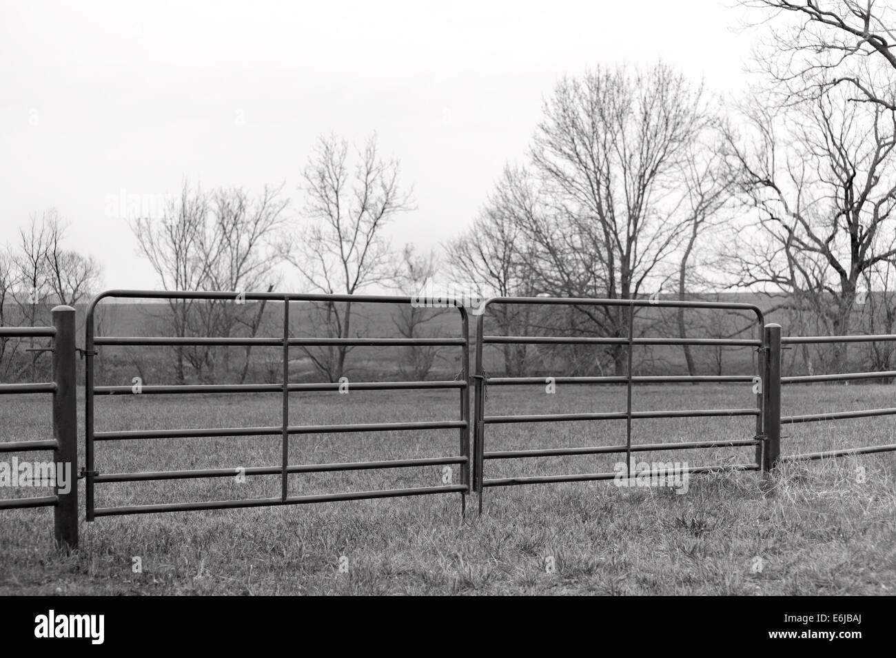 Farm Pasture Metal Fence Gate In Black And White Stock