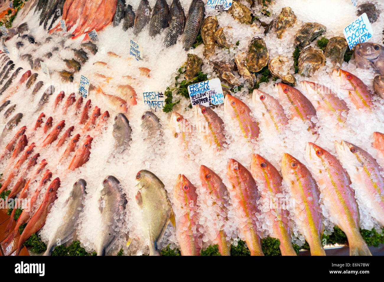 Variety of fresh fish on ice from around the world for for Jamaica fish market