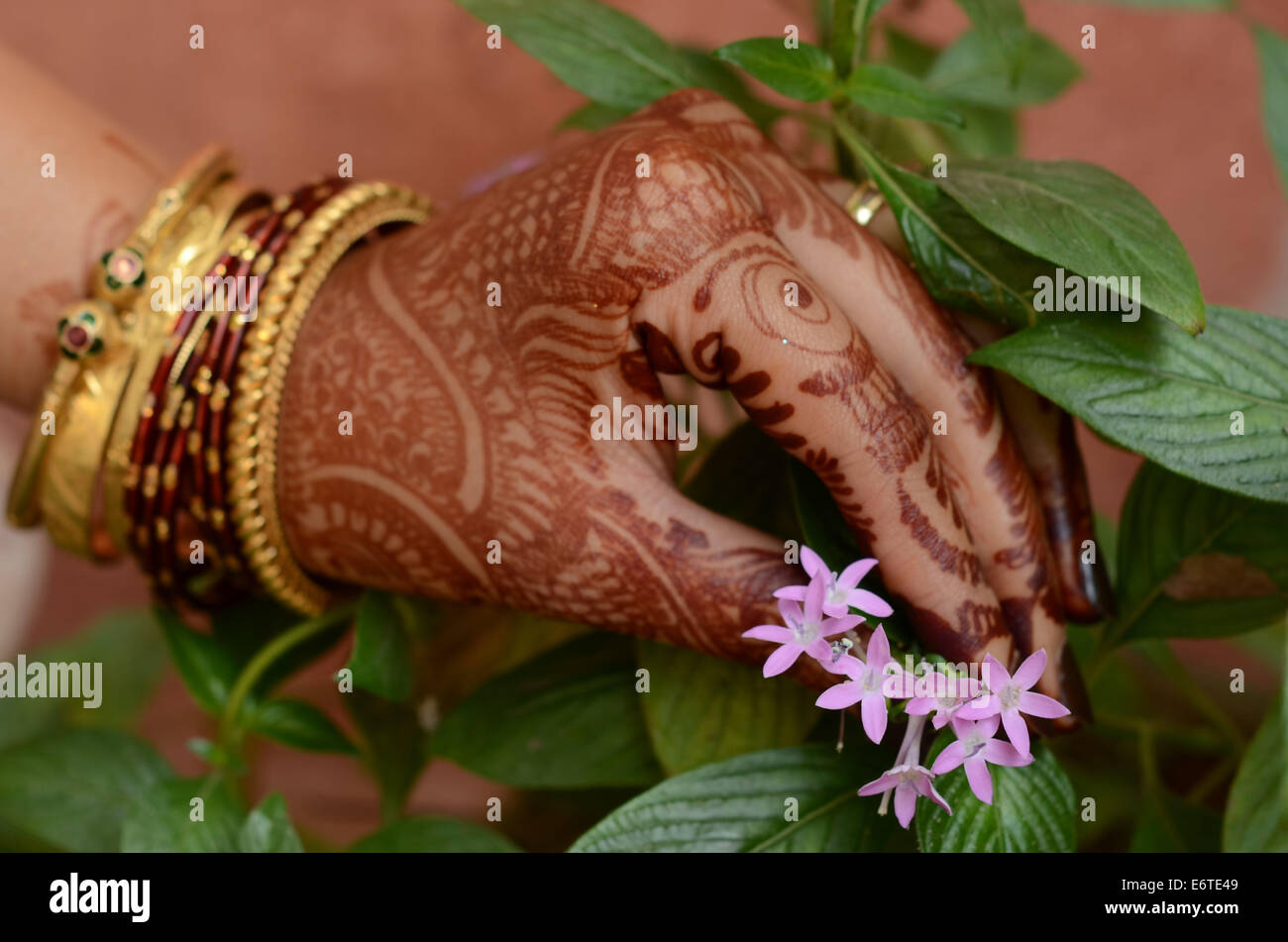 Flower picking by a beautiful mehndi tatoo hand with bangles Stock ...