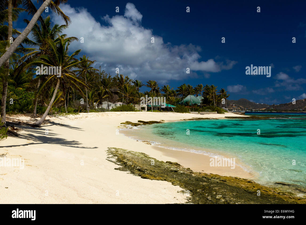 Caribbean Beach Scenes: Tranquil Caribbean Beach Fringed With Palm Trees. Vivid