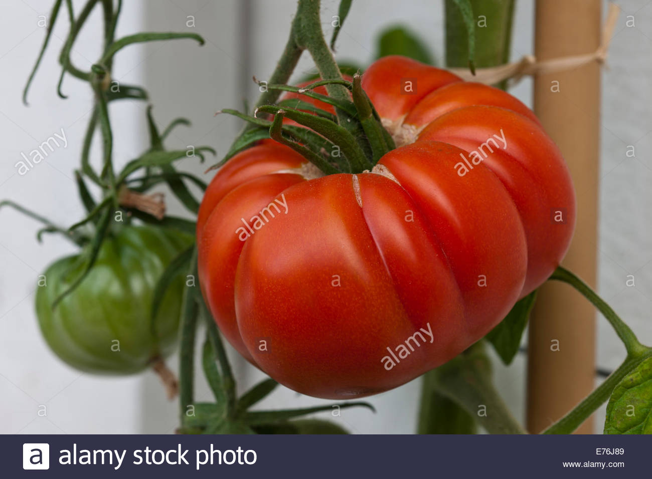 Kitchen Garden Foods Tomato Belriccio Summer Vine Vegetable Orange Red Kitchen Garden