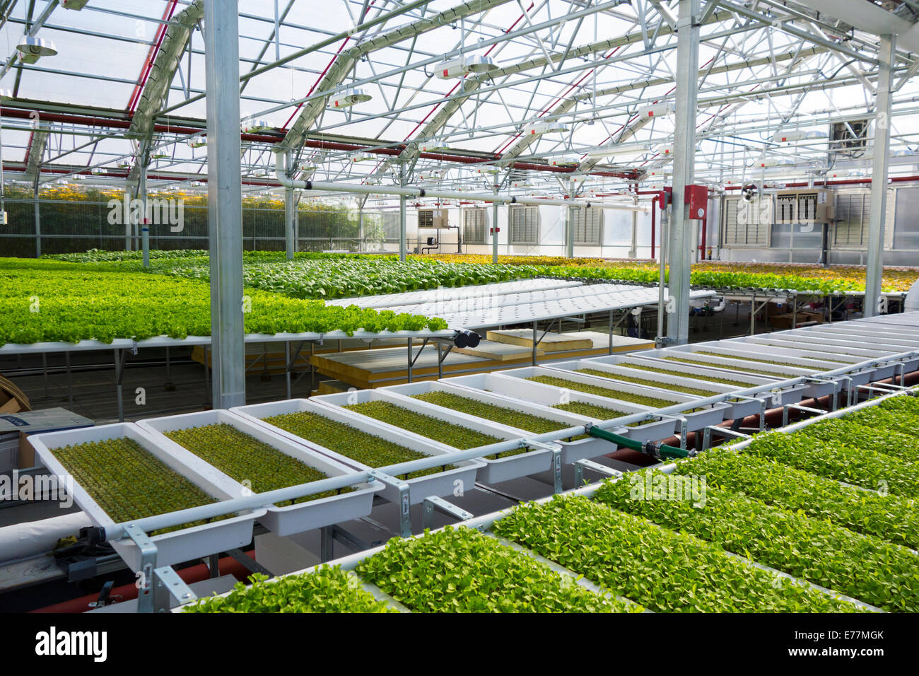 The greenhouse market