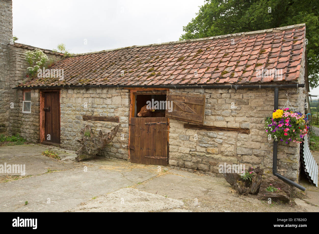 Attractive Old Stone Stables With Red Tiled Roof Calf