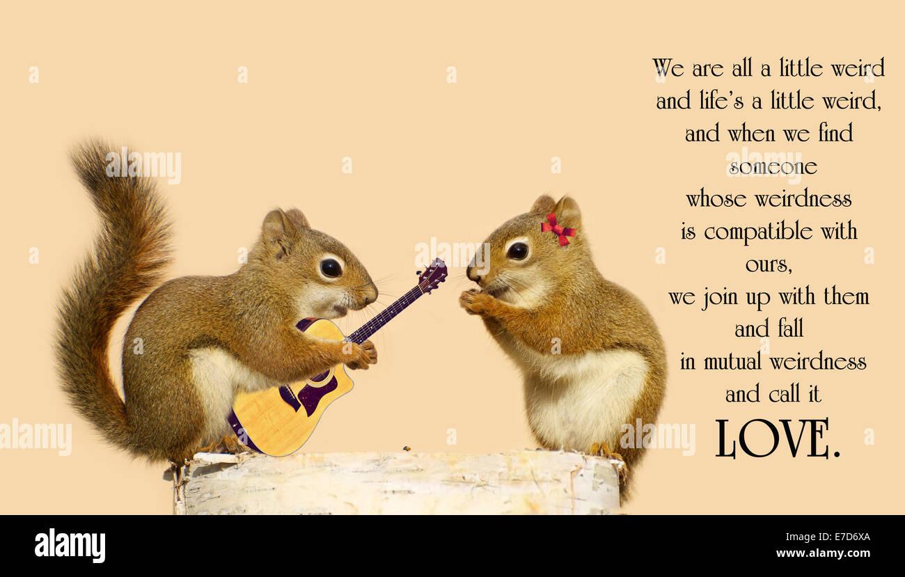 Cute squirrels in love - photo#12