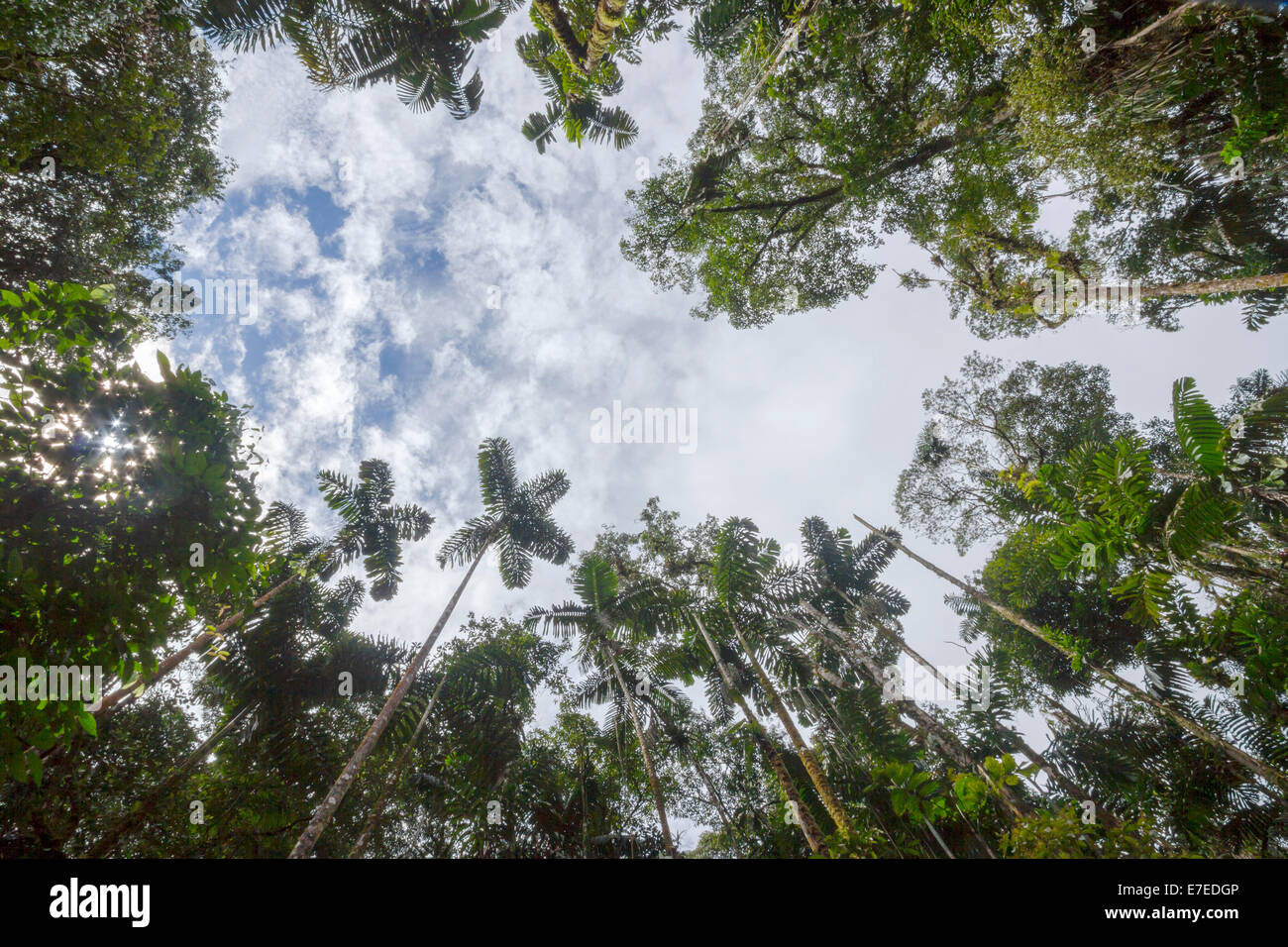 Looking Up To The Sky Above A Tree Fall Gap In Tropical