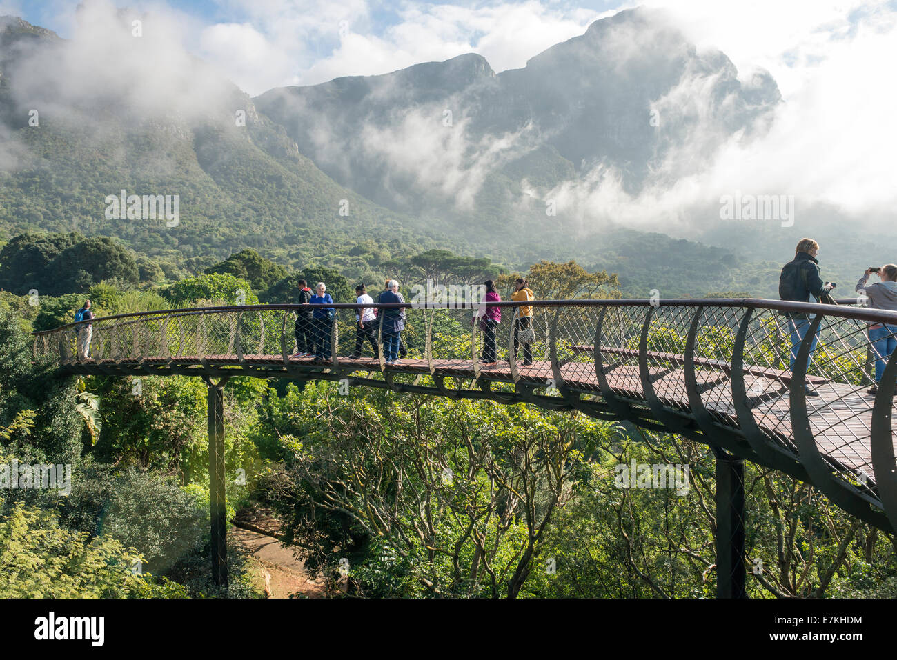 Cape Town Kirstenbosch Gardens Centenary Tree Canopy Walkway opened in May 2014 to celebrate 100 years & Kirstenbosch Stock Photos u0026 Kirstenbosch Stock Images - Alamy