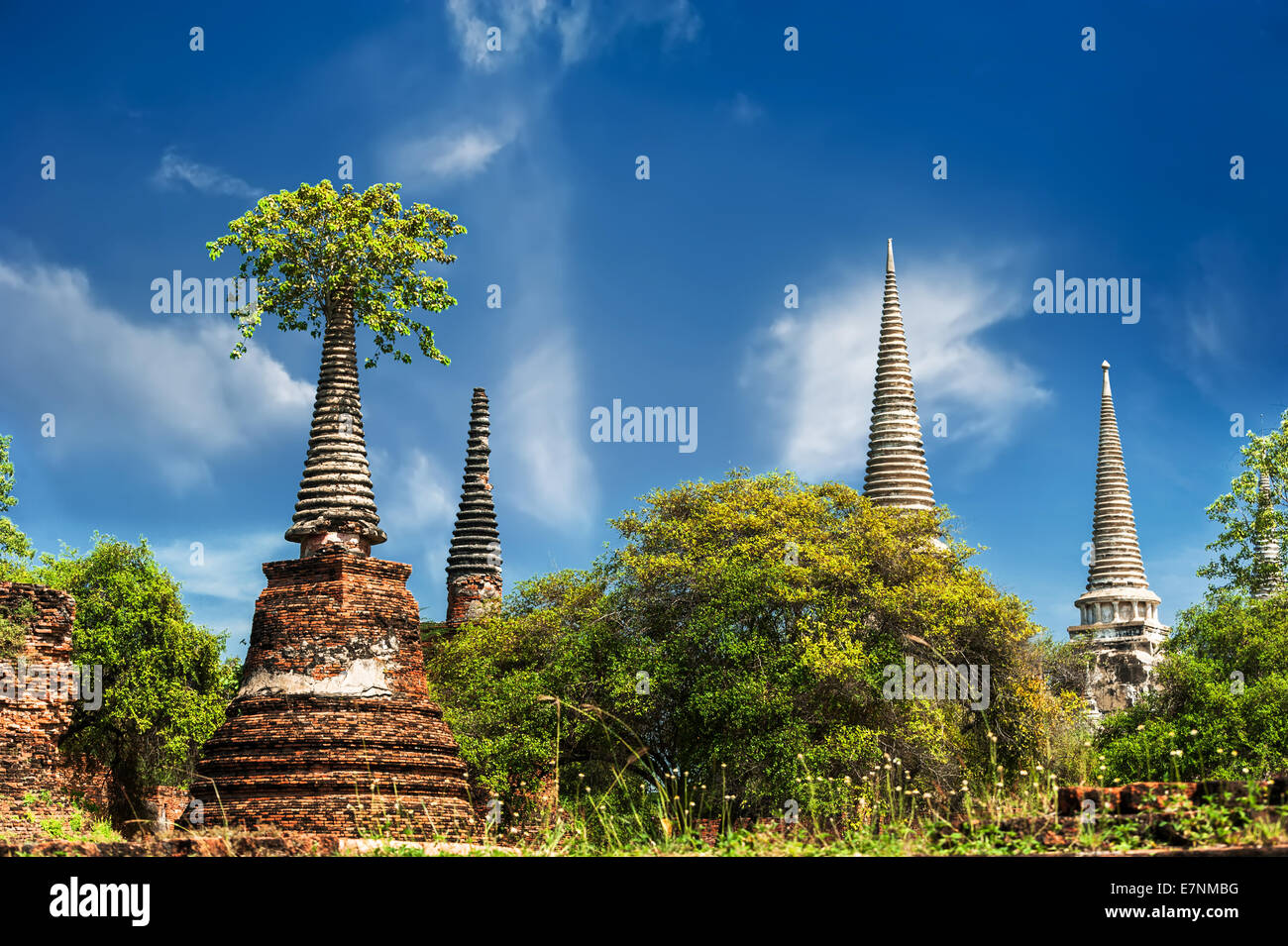 Asian Religious Architecture Ancient Ruins With Growing Trees Under Blue Sky Ayutthaya Thailand Travel Landscape And Destinat