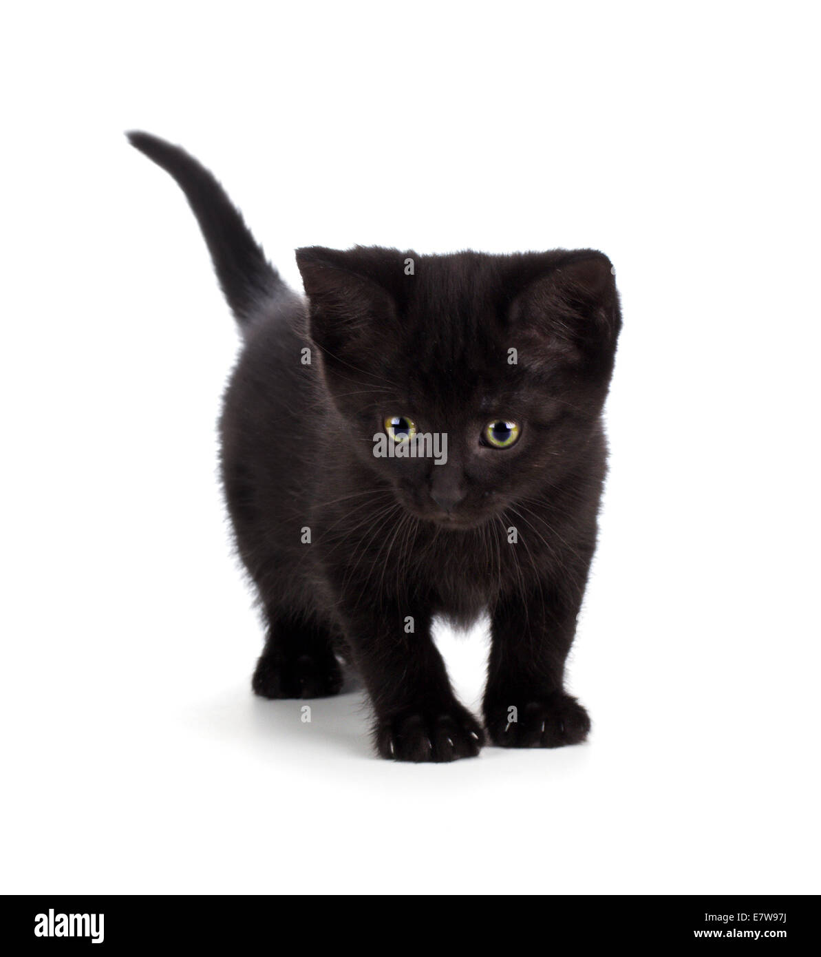 Cute black kitten with green eyes isolated on white Stock