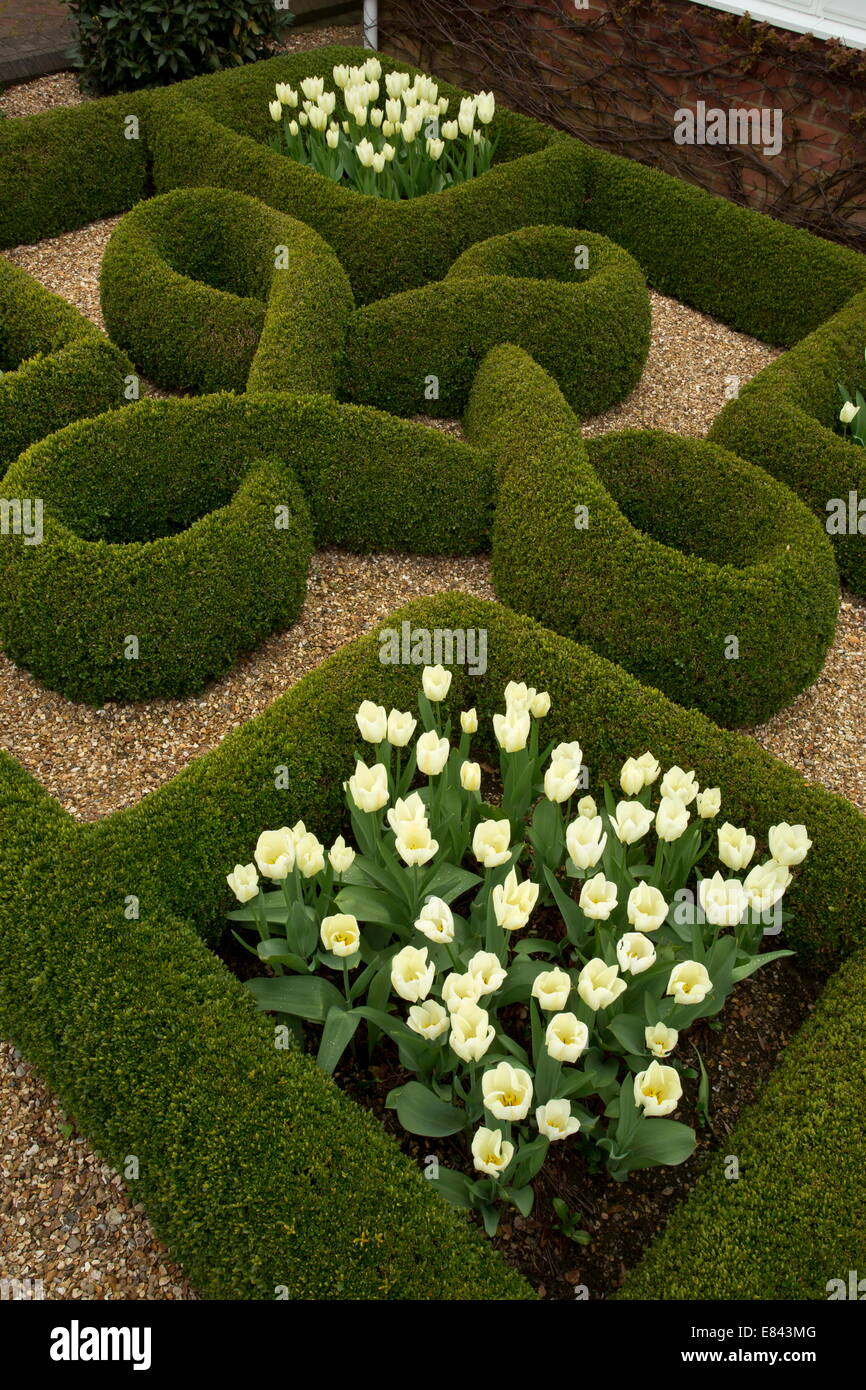Knot garden with box hedges and white tulips in a private for Knot garden design ideas