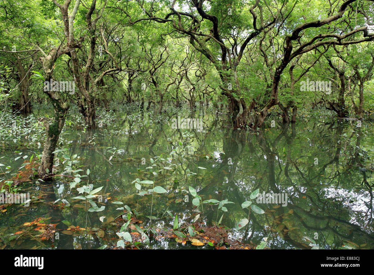 Ratargul Natural Swamp Forest is a freshwater swamp forest located ...