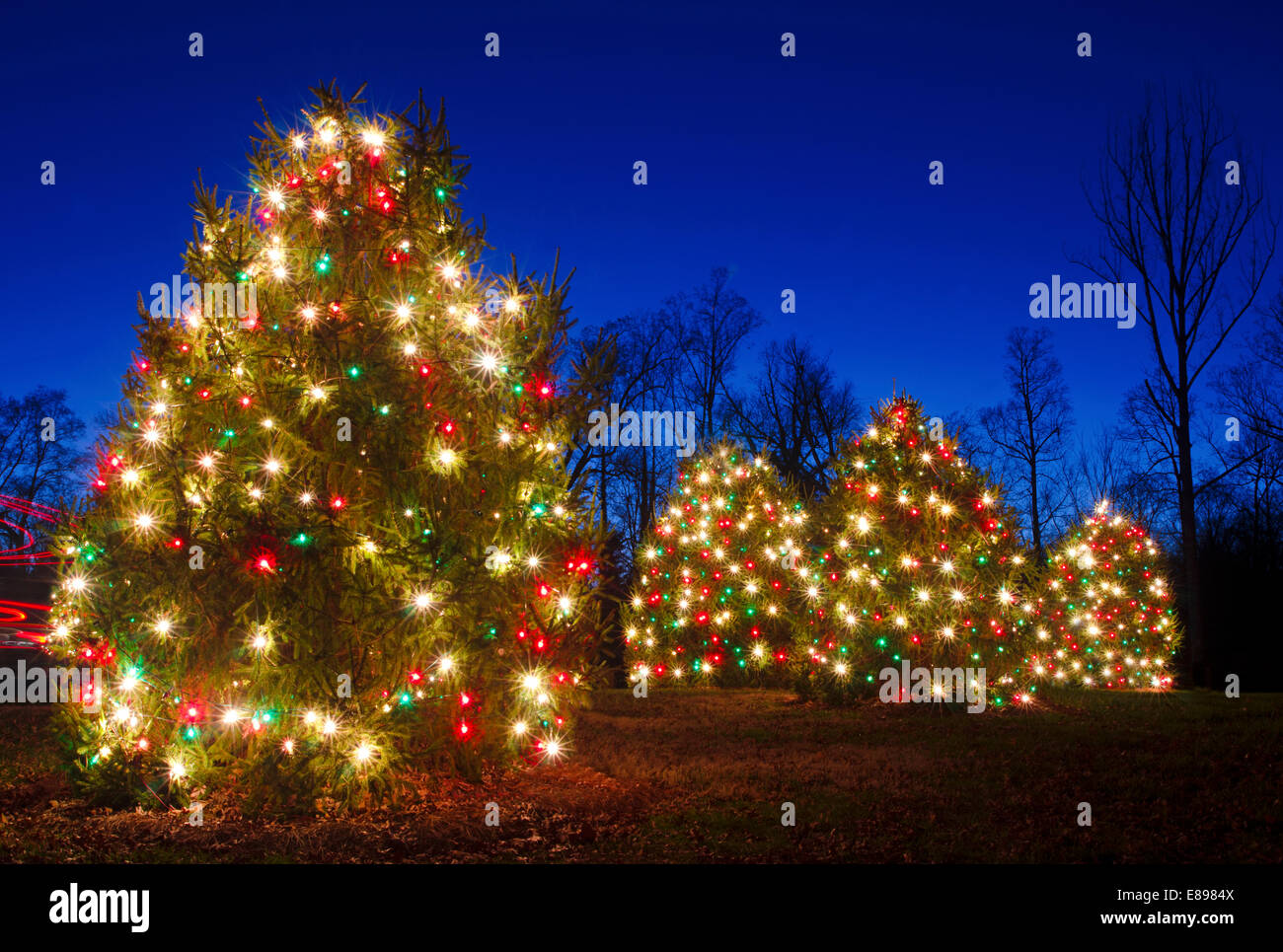 Outdoor Christmas Trees Have Been Decorated With Red, Green And White Lights  And Shot Against A Brilliant Blue Sky.
