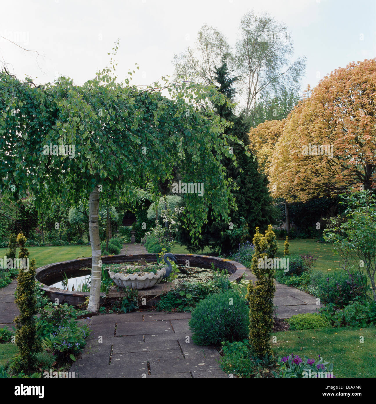 Small weeping birch tree beside circular pool in large for Weeping trees for small gardens