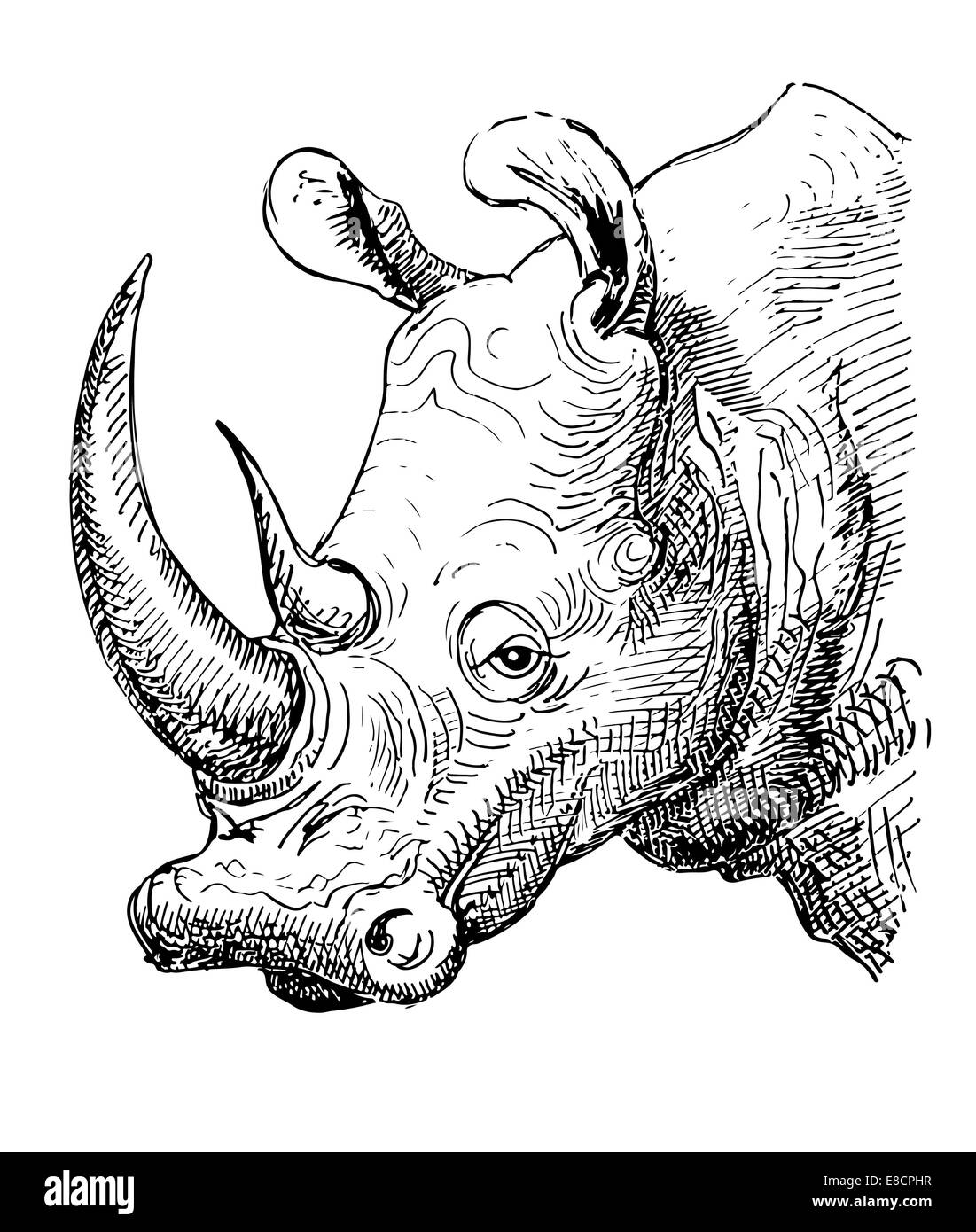 Uncategorized Rhinoceros Drawing artwork rhinoceros sketch black and white drawing stock photo drawing