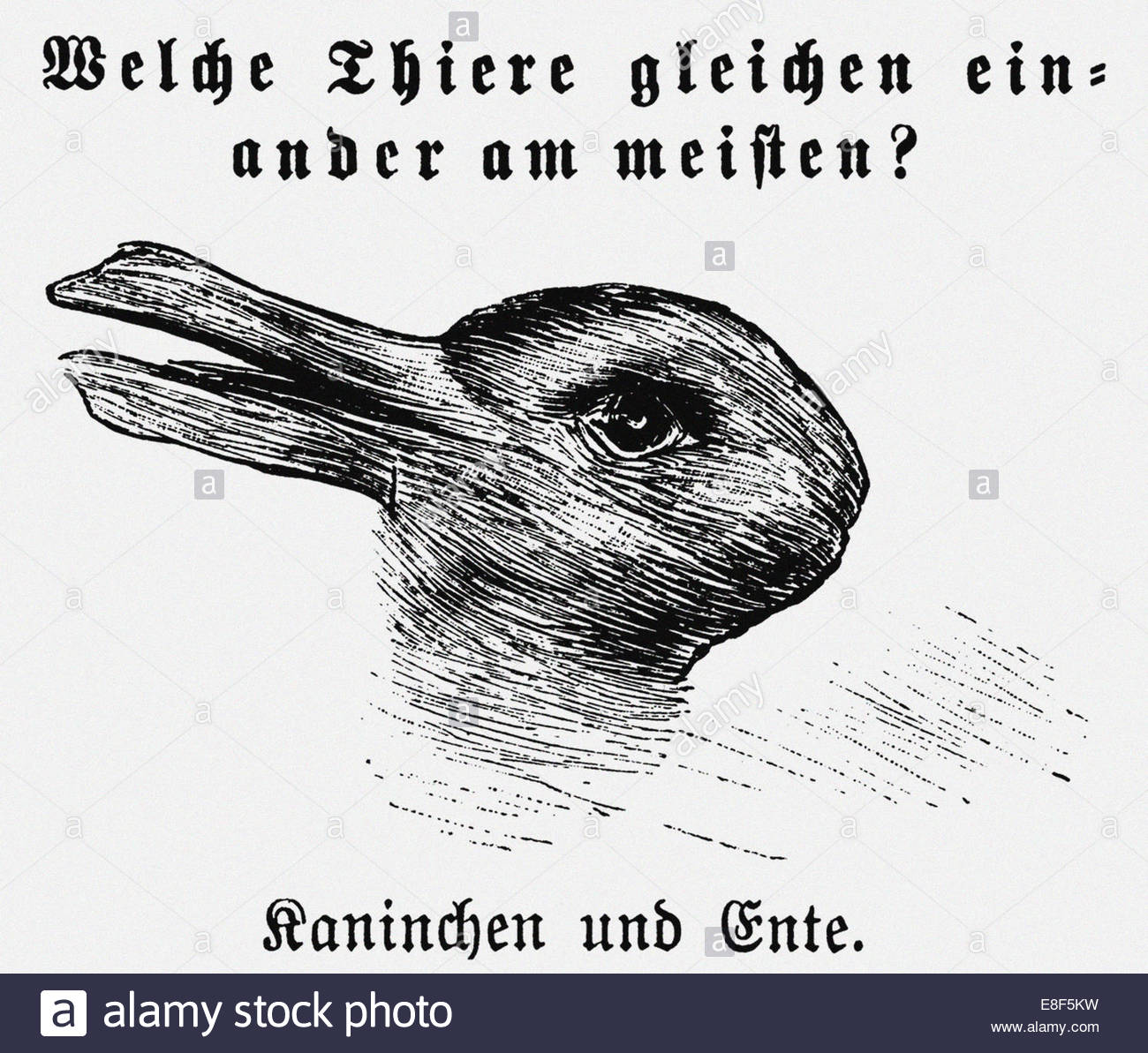 duck-rabbit-illusion-from-jastrow-j-the-