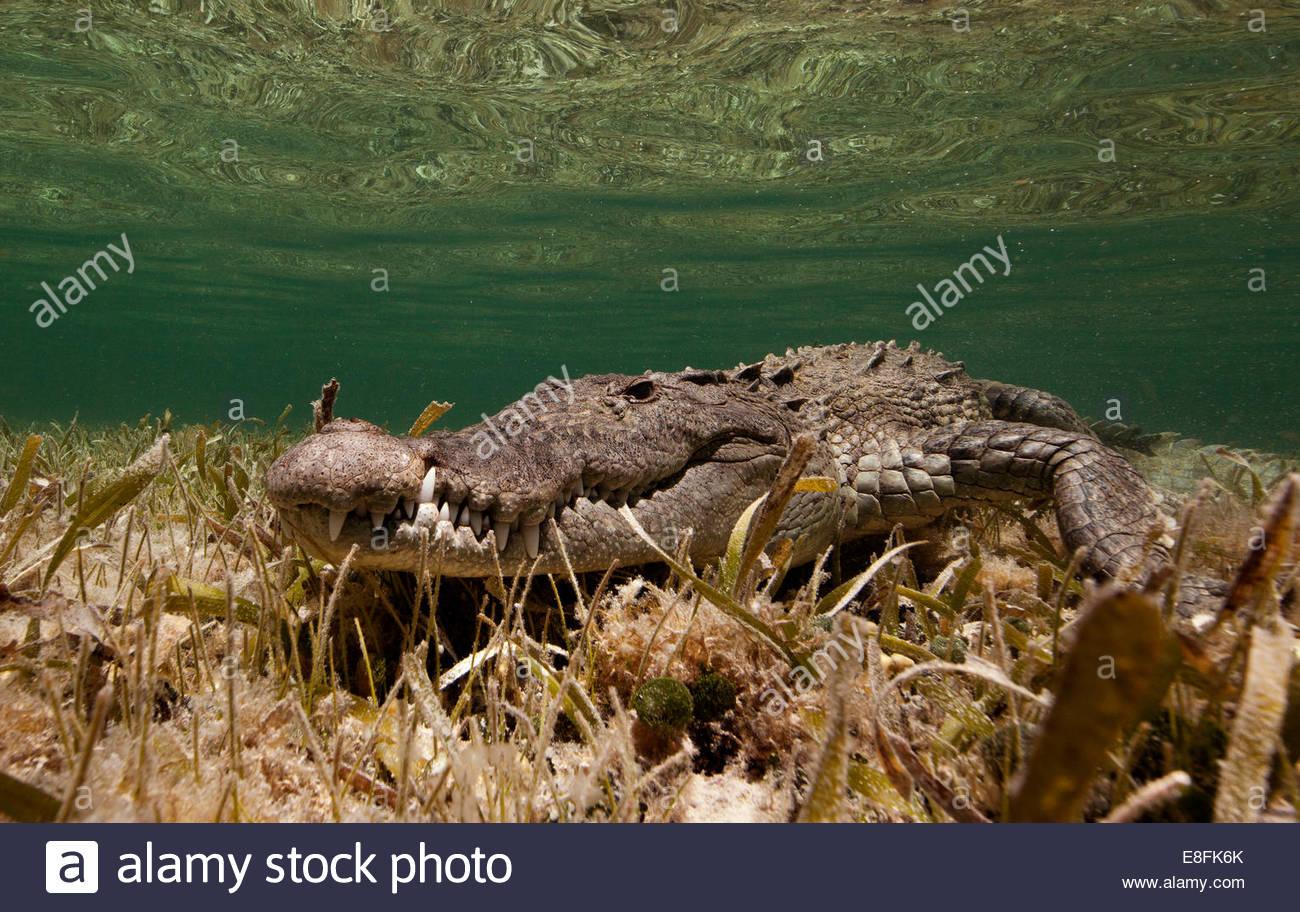 Фото морських тварин 3 фотография