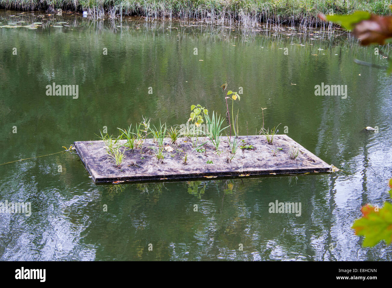 Hydroponic garden floating on the ausable river in grand for Fish pond hydroponics