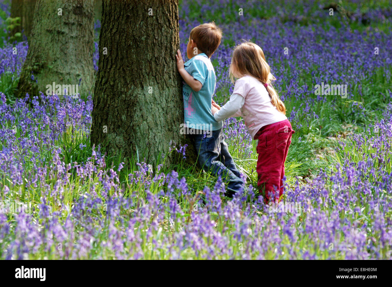 children playing hide amp seek in a bluebell wood chilterns
