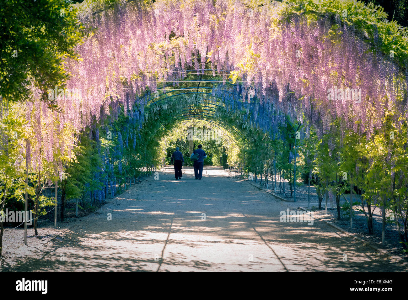 Colourful wisteria arch in the adelaide botanic gardens for Adelaide gardens