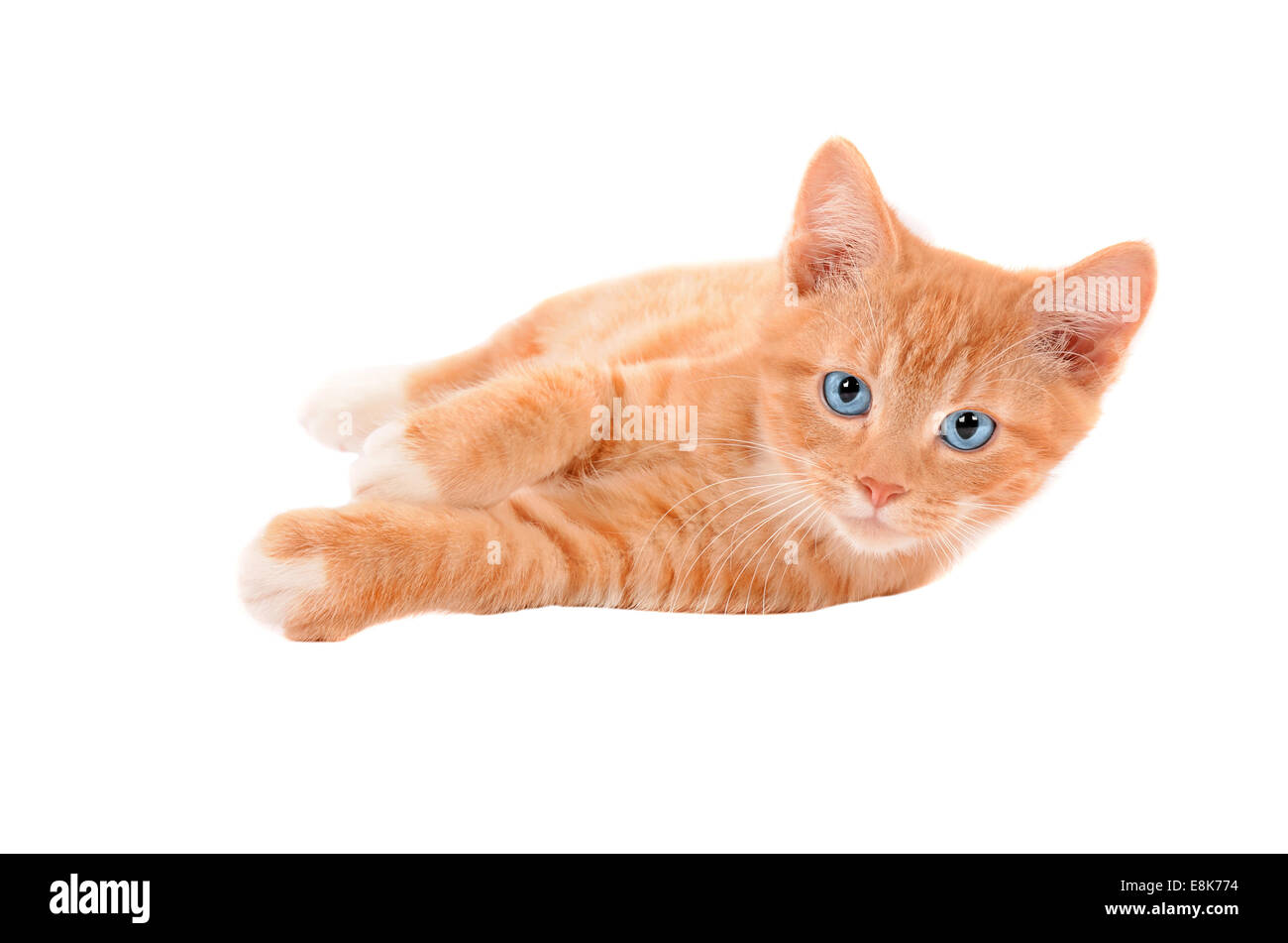 Orange Tabby Cat with blue eyes laying on a white ...