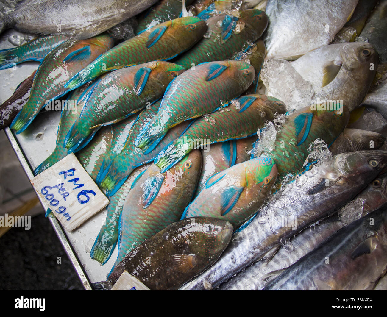 George town penang malaysia 6th oct 2014 parrot fish for Parrot fish for sale