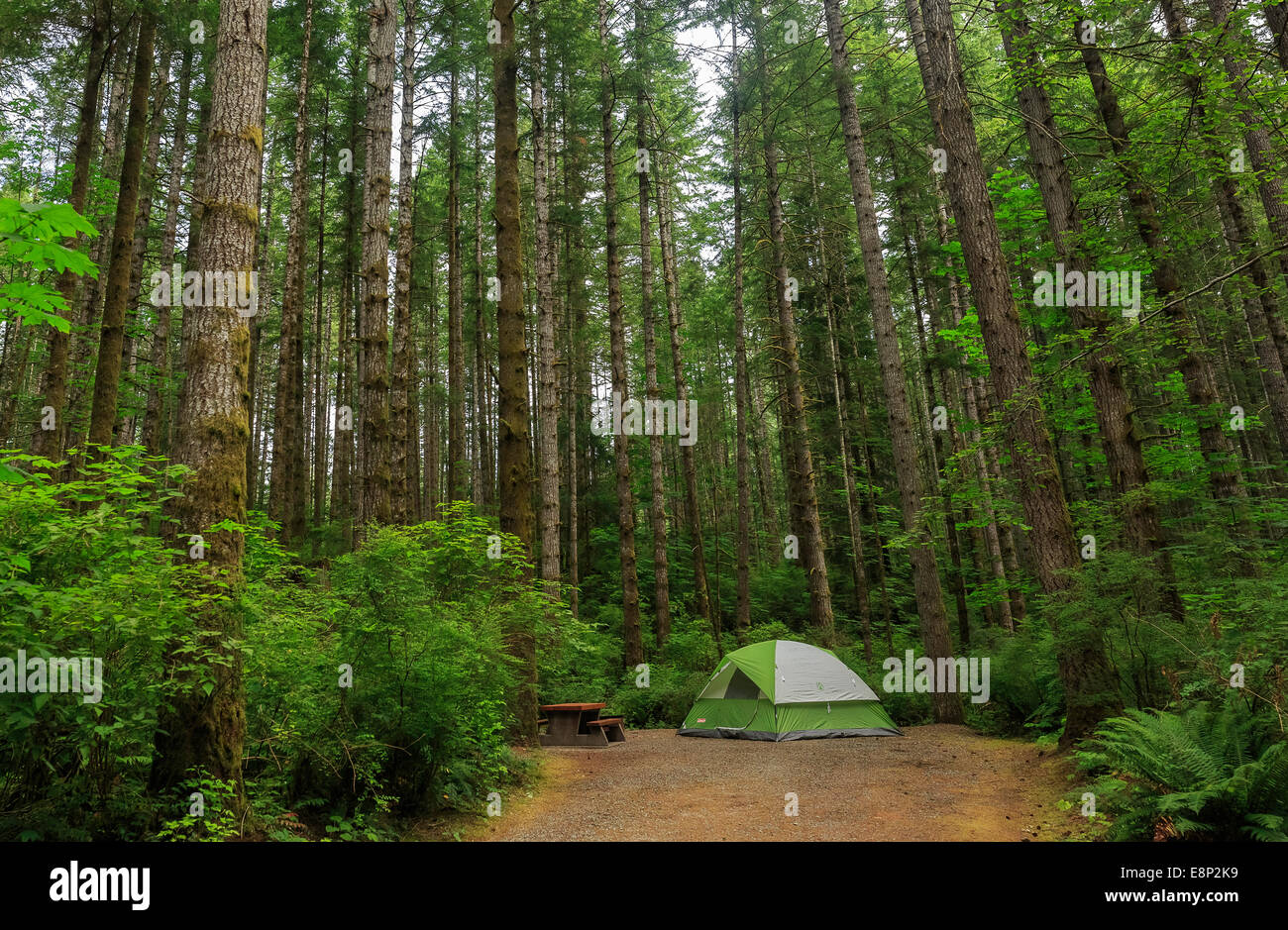 A pitched tent in a wooded c&site & A pitched tent in a wooded campsite Stock Photo Royalty Free ...
