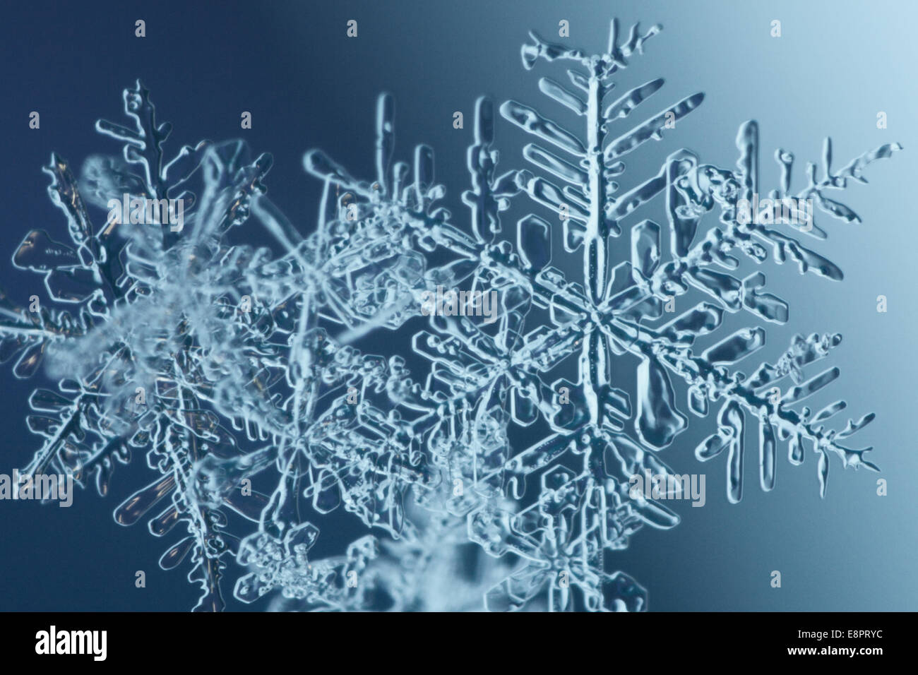 extreme close up of snowflakes stock photo royalty free image