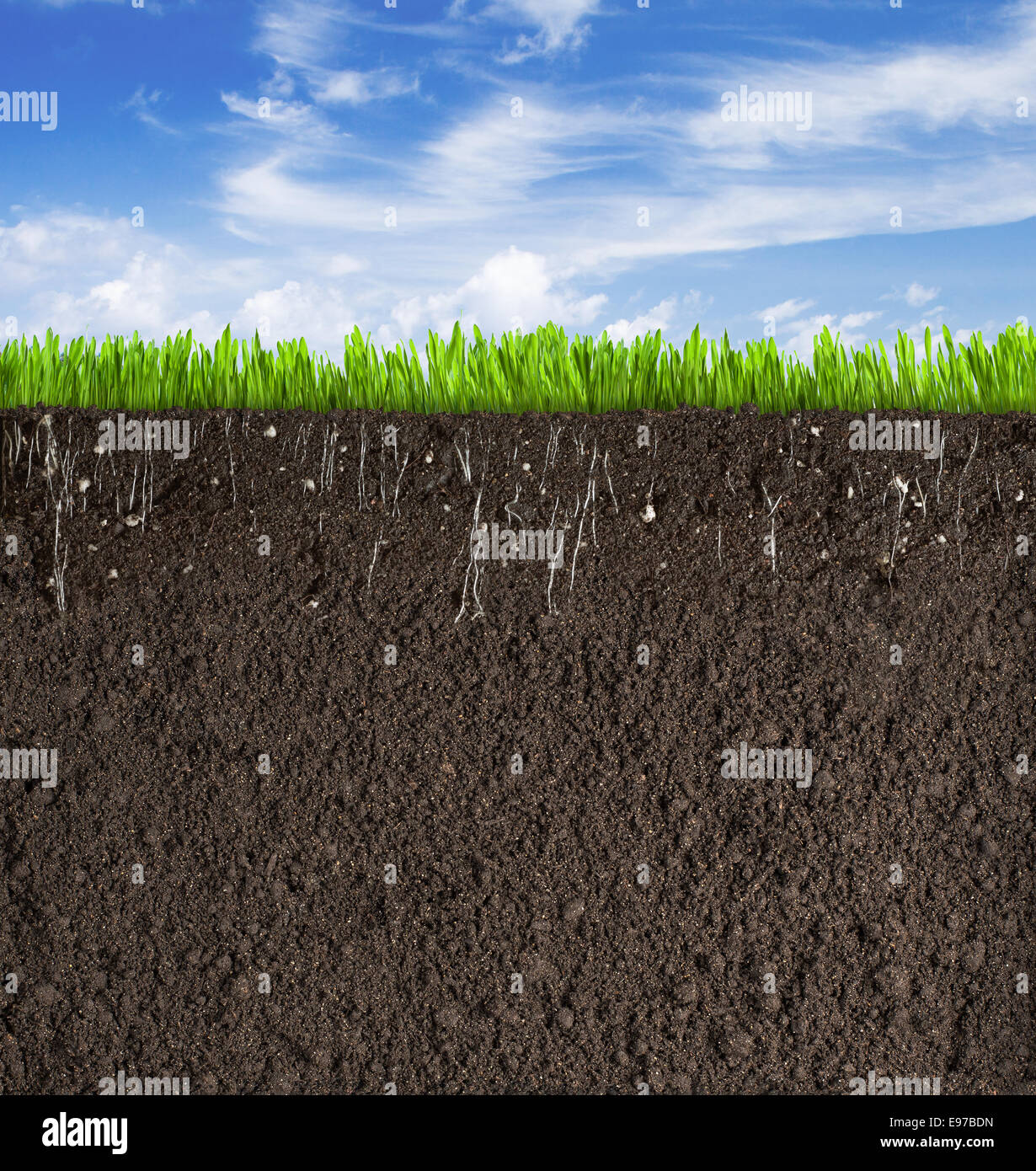 Soil or dirt section with grass under sky as background for Dirt and soil