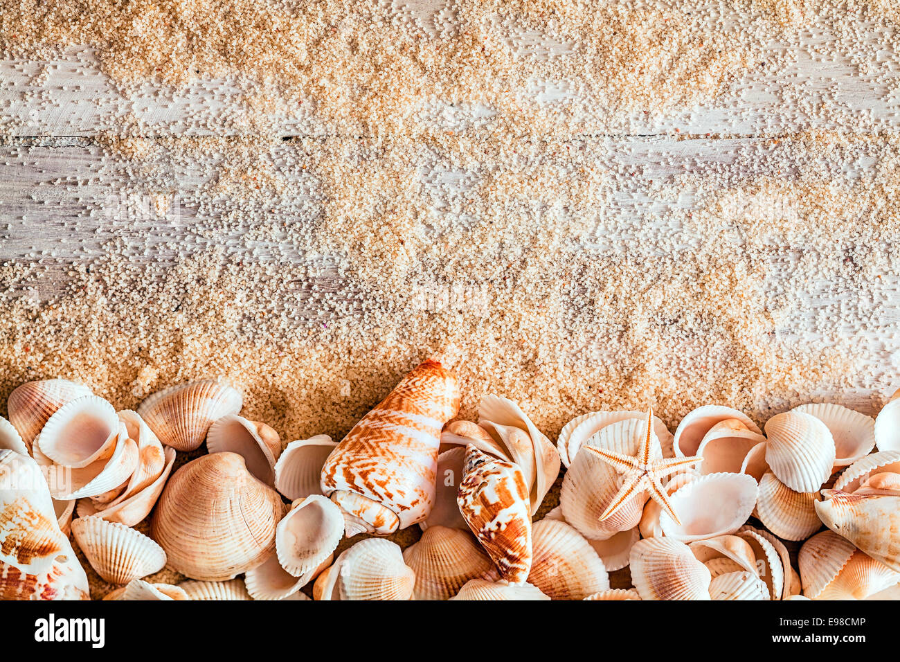 border of assorted seashells including a cone bivalves conch and