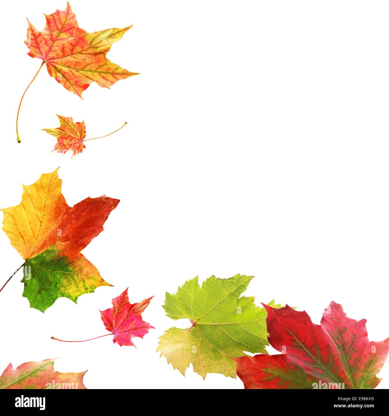 Corner border of colorful vivid variegated autumn or fall ...