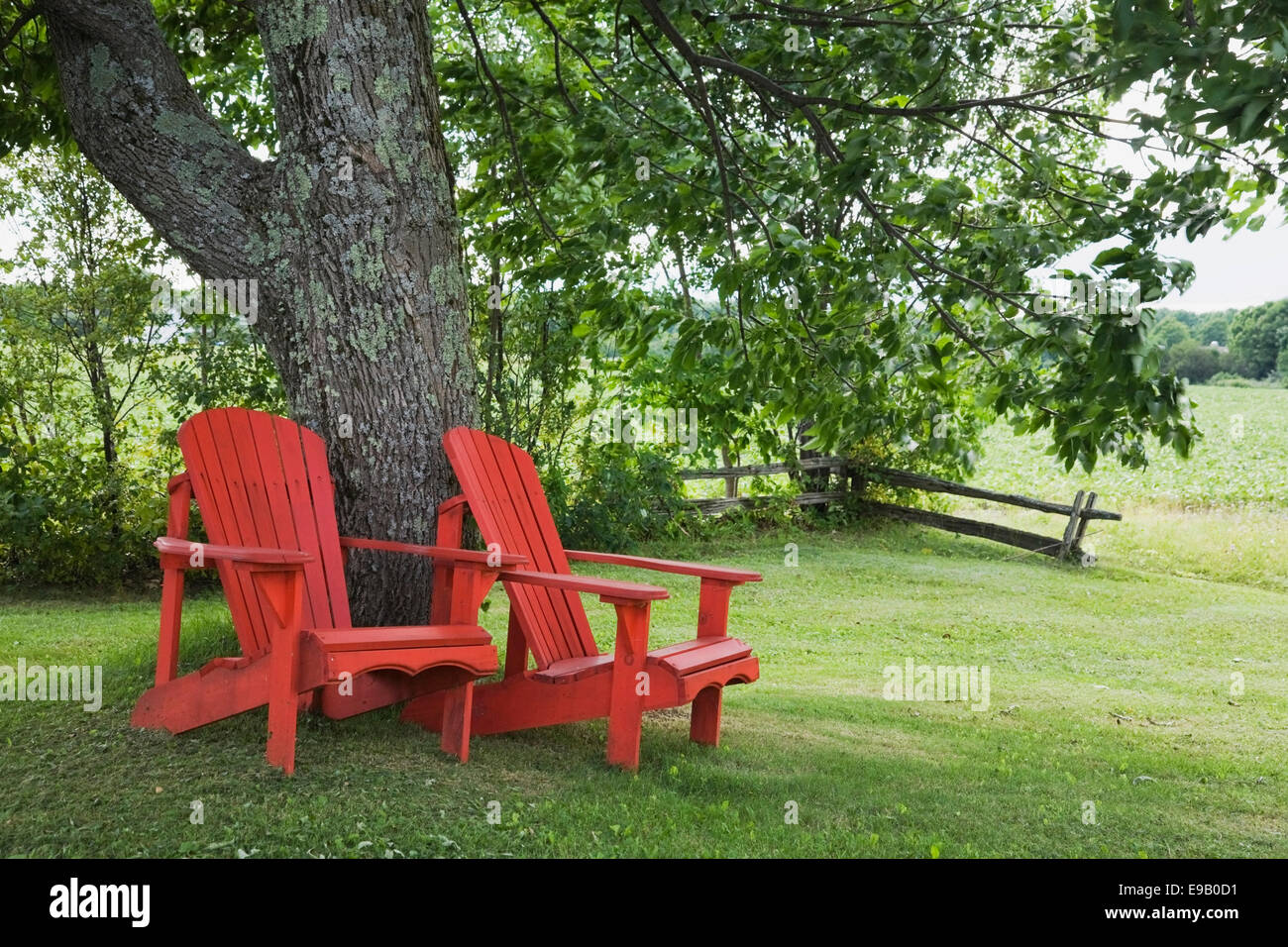 stock photo two red wooden adirondack chairs under a tree in a residential backyard quebec canada