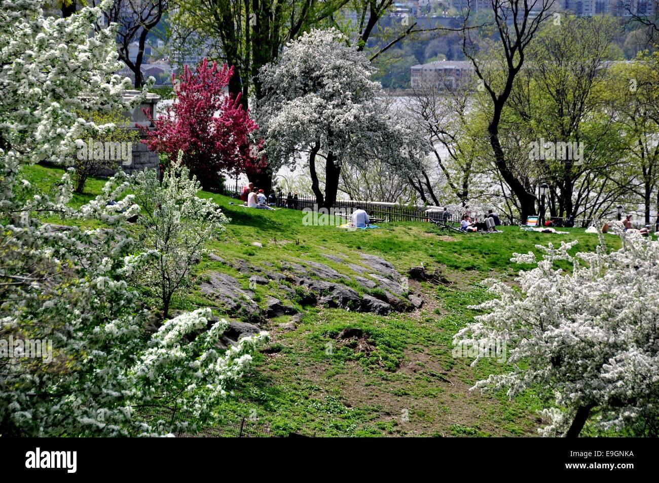 nyc beautiful spring flowering trees in riverside park