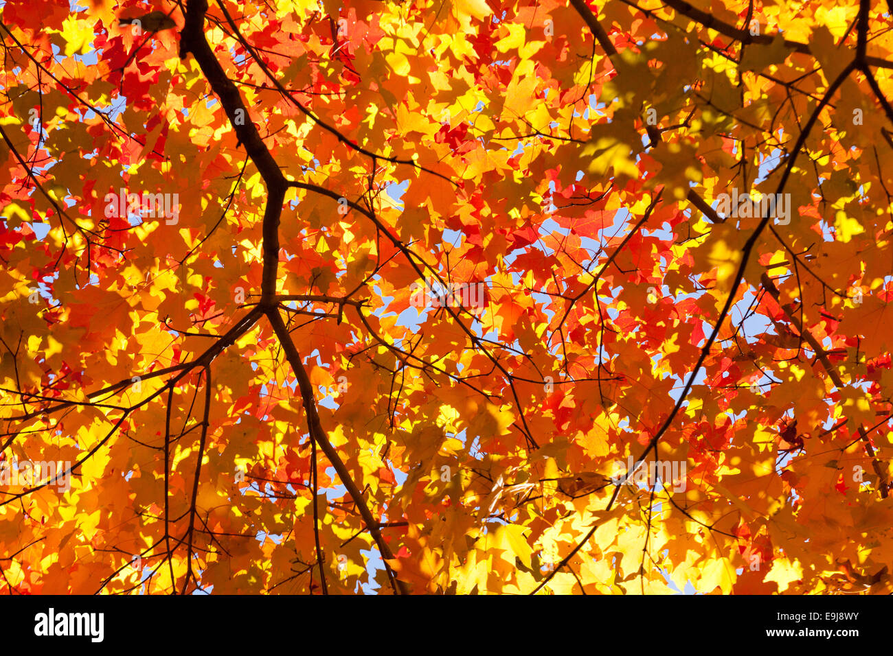 how to fix the color of leaves
