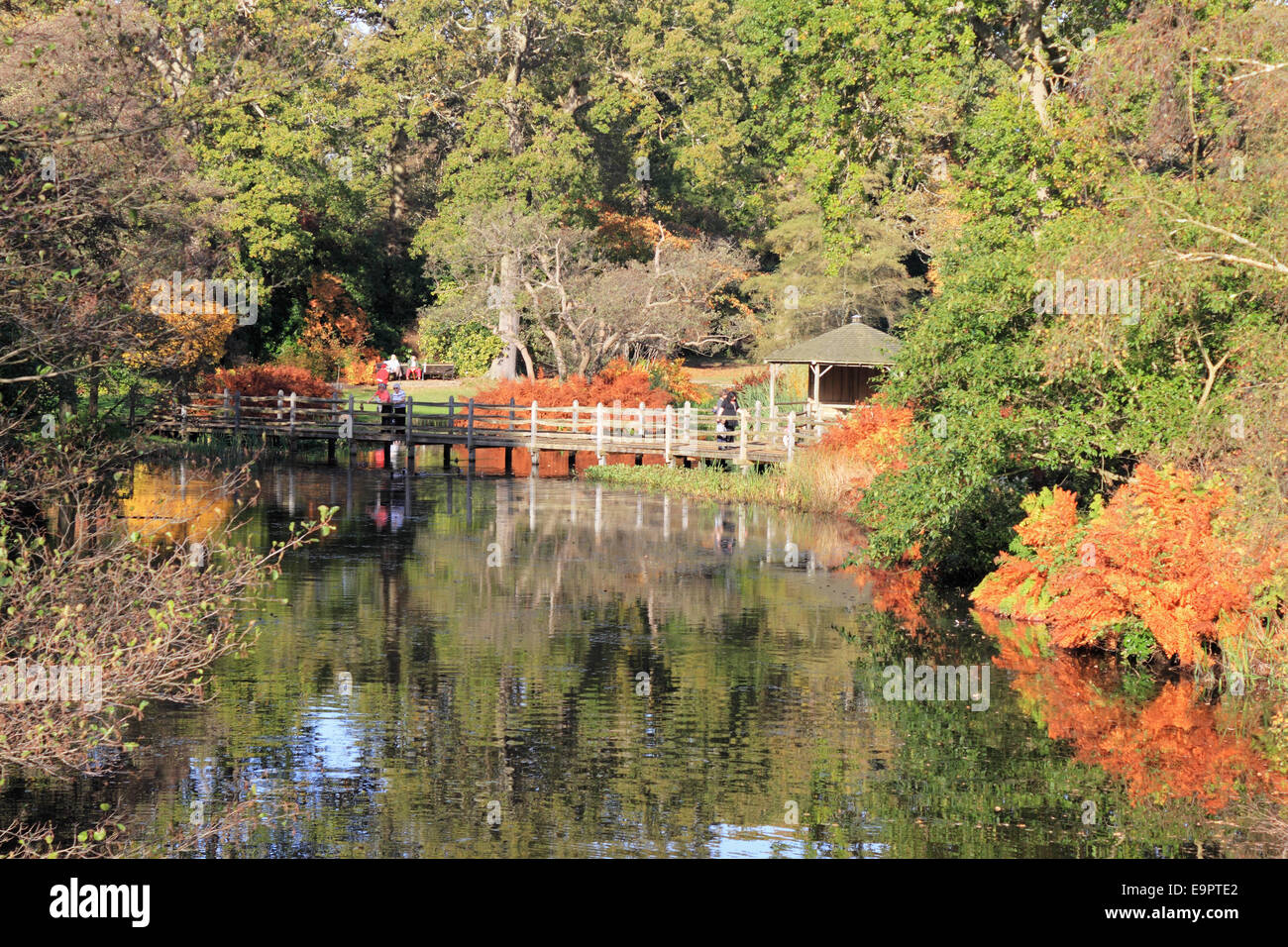Savill Garden Englefield Green Windsor Berkshire Uk 31st October Stock Photo Royalty Free
