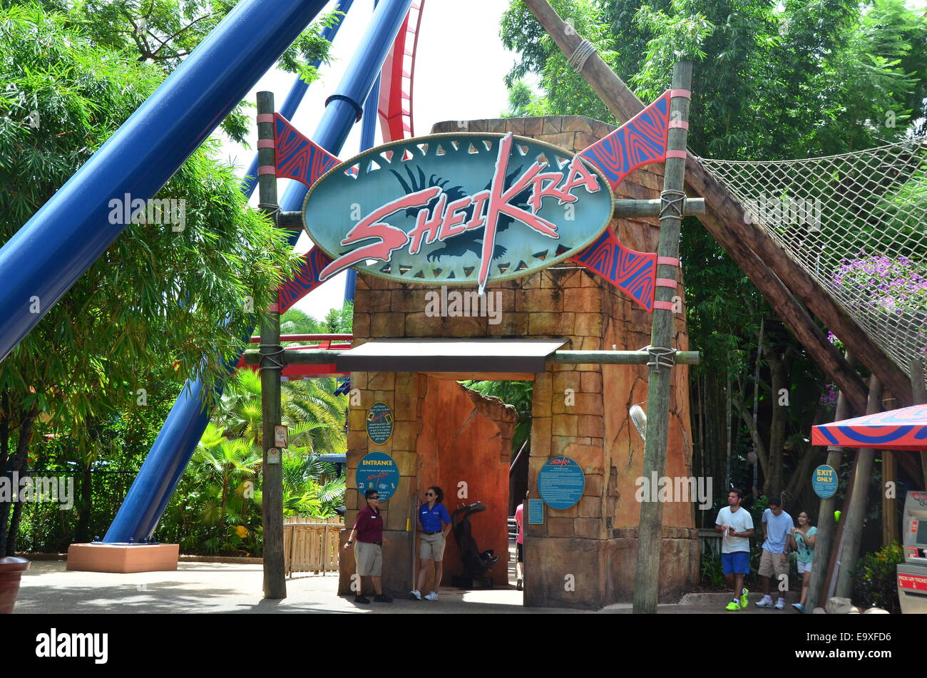 Sheikra Roller Coaster Ride At Busch Gardens Tampa Florida Usa
