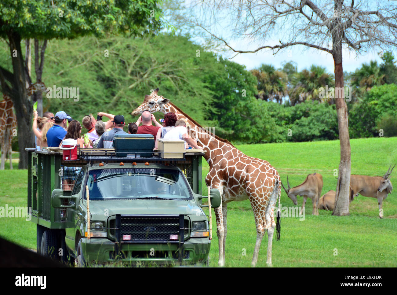 Personable Florida Truck Stock Photos  Florida Truck Stock Images  Alamy With Lovable Visitors Feeding Giraffes From An Open Truck At Busch Gardens Tampa  Florida Usa With Astounding The Kitchen Garden Also Garden Umbrella Covers In Addition Draper Garden Shredder And Jo Gardener As Well As Carr Hall Garden Centre Additionally Pots For Herb Garden From Alamycom With   Lovable Florida Truck Stock Photos  Florida Truck Stock Images  Alamy With Astounding Visitors Feeding Giraffes From An Open Truck At Busch Gardens Tampa  Florida Usa And Personable The Kitchen Garden Also Garden Umbrella Covers In Addition Draper Garden Shredder From Alamycom