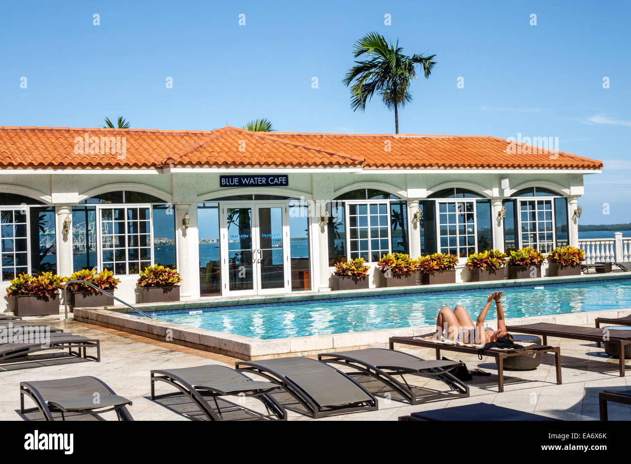 Miami Florida Intercontinental Hotel Swimming Pool Area Lounge Chairs Blue  Water Cafe