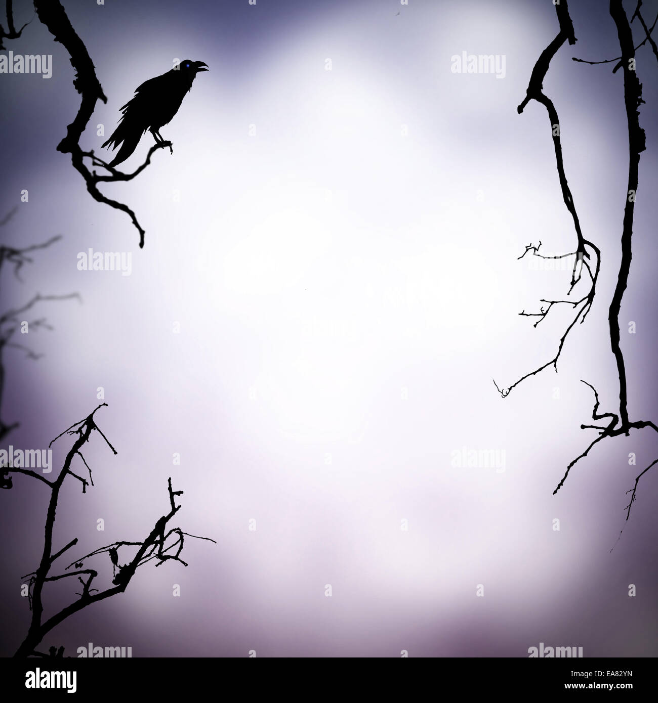 halloween background with raven silhouette and free space for text - Halloween Background Images Free