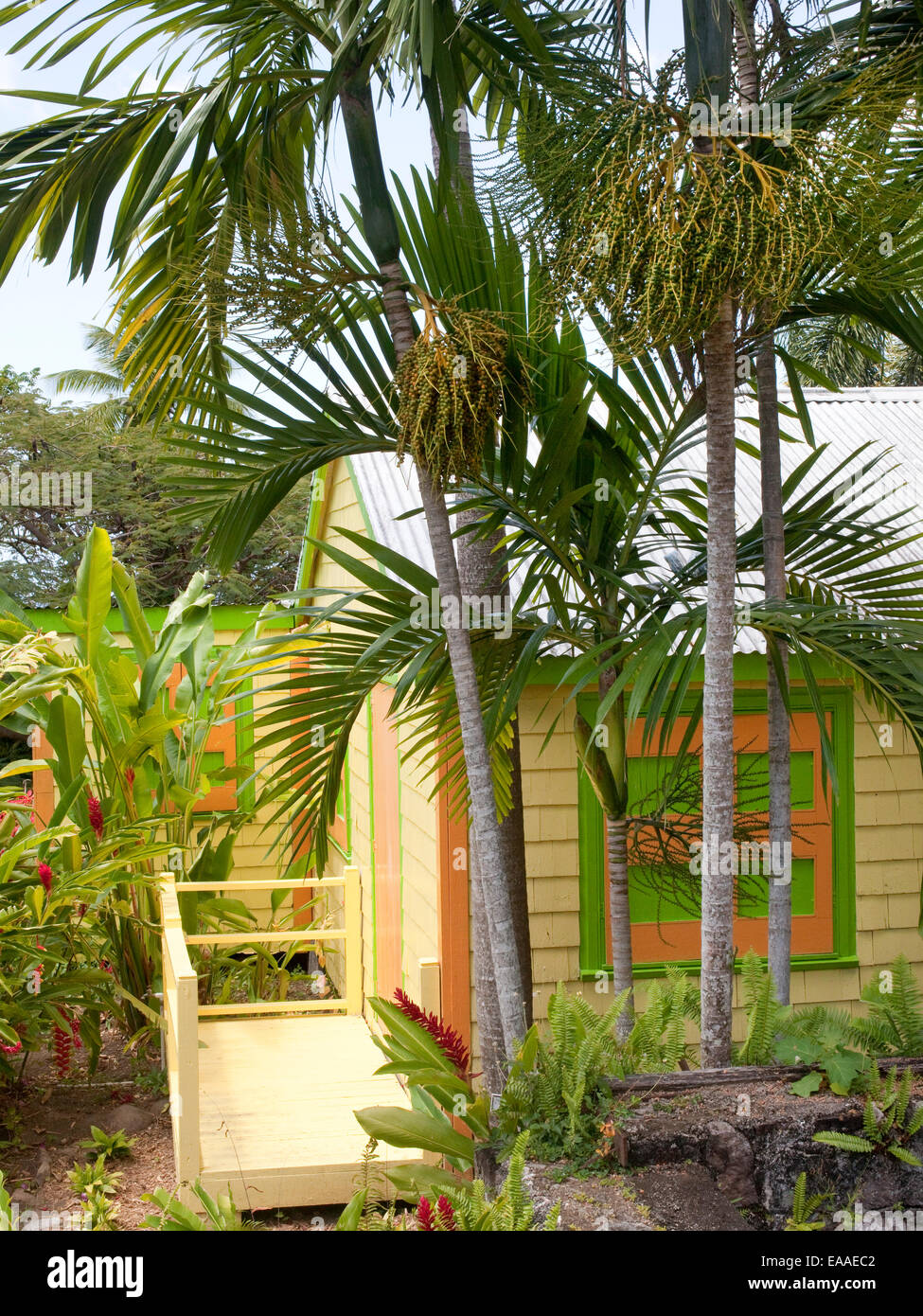 brightly colored small wooden house and palm trees on tropical Stock ...