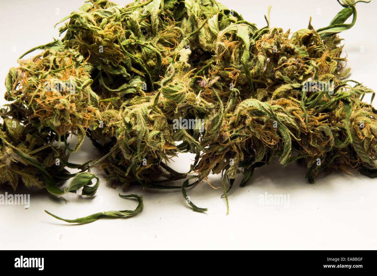 Photo - Cannabis sativa, indica, buds of marihuana, hemp, ganja, plant ... Cannabis Indica Plant
