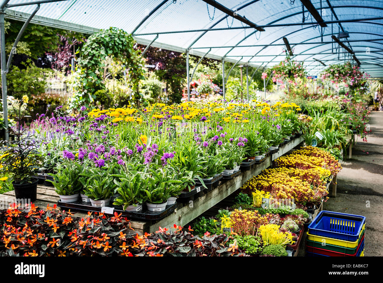 Inside a retail plant nursery in wiltshire uk stock photo for Plant nursery