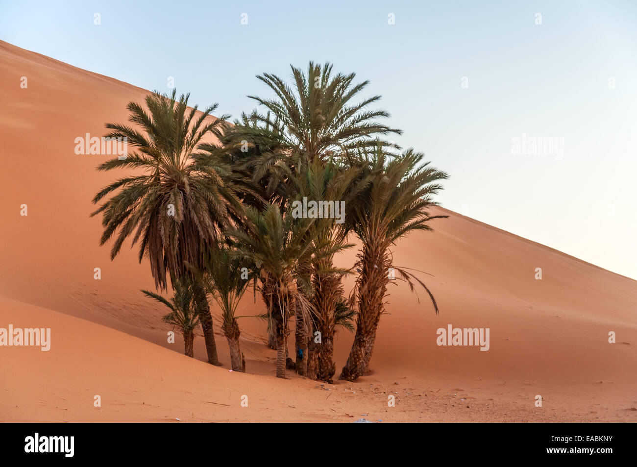 Desert dating