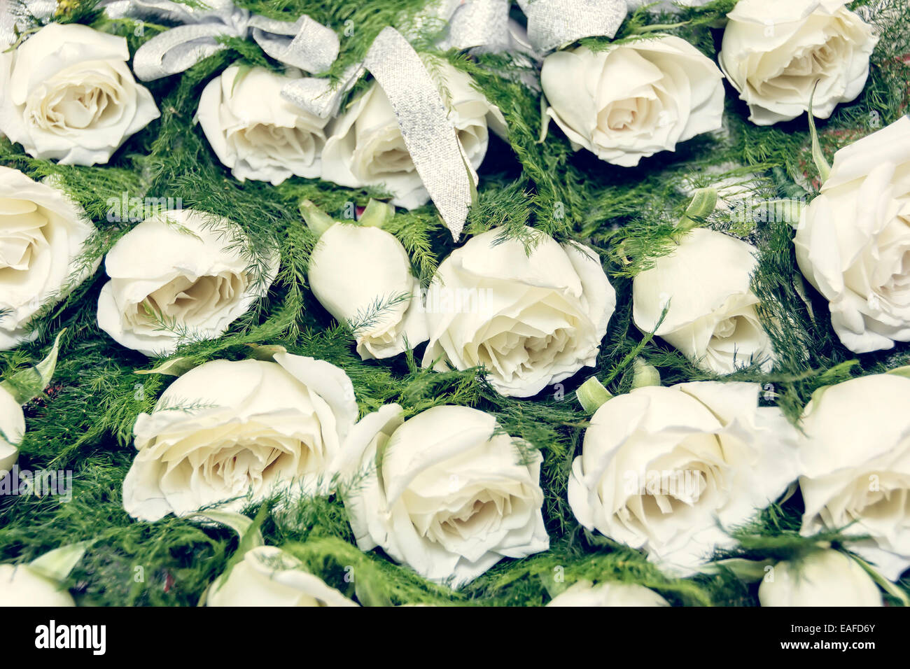 rows of white rose boutonniere for wedding entourage - Garden Rose Boutonniere
