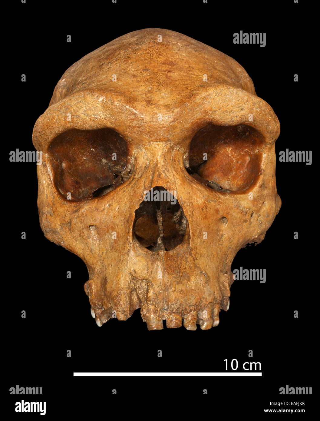 an evidence and interpretation in paleoanthropology Evidence of hominid activity between 8 and 25 million it should be noted that this interpretation is not agreed upon by all in paleoanthropology, us.