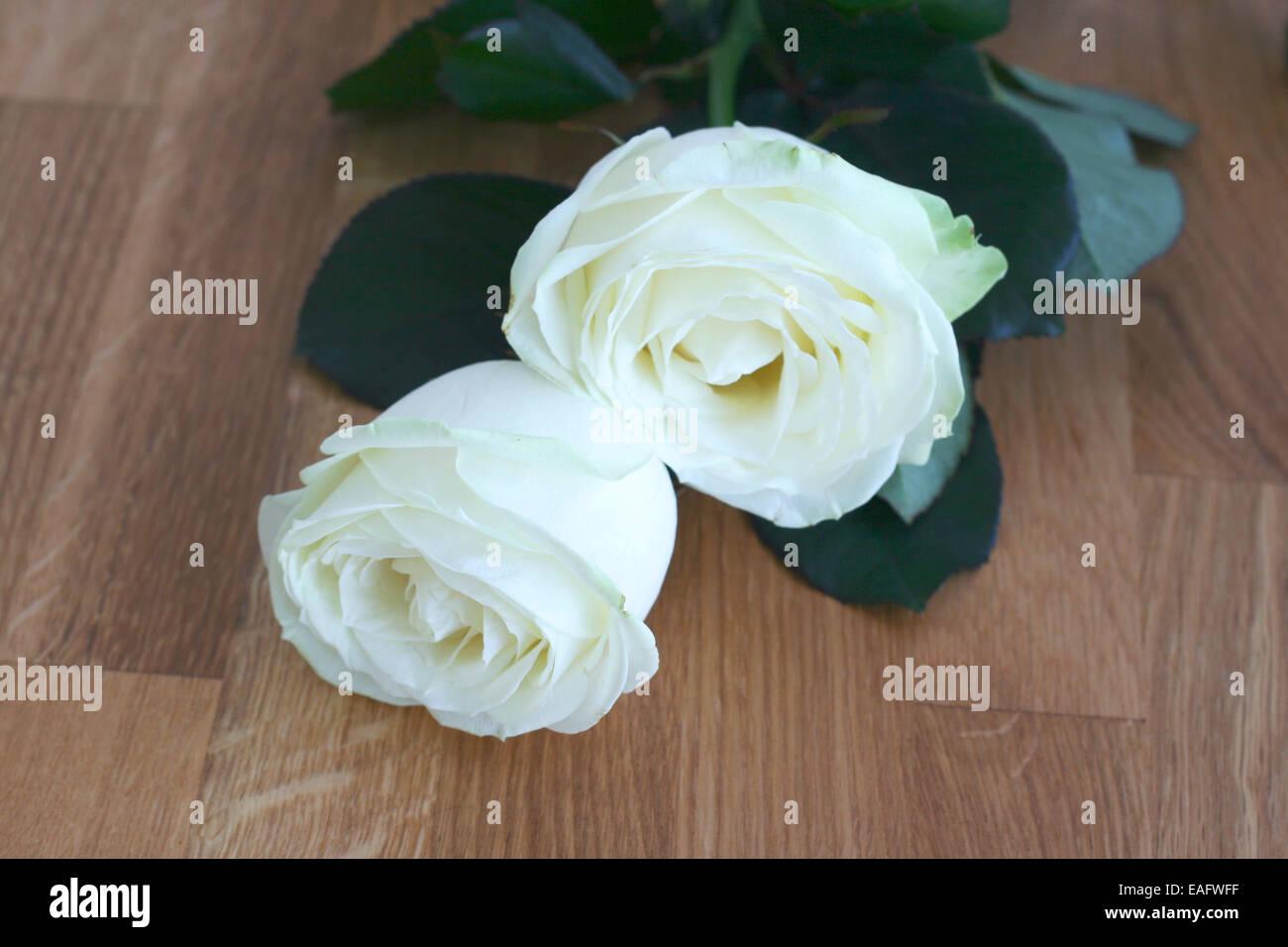 Rose Rosen Weiss Weisse Holz Maserung Holzbrett Brett Platte Stock ...
