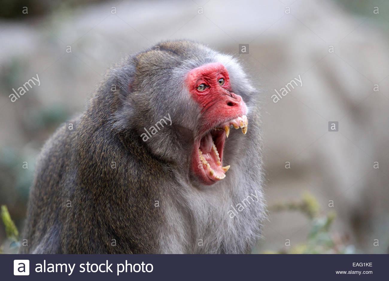 New World Monkey General Information