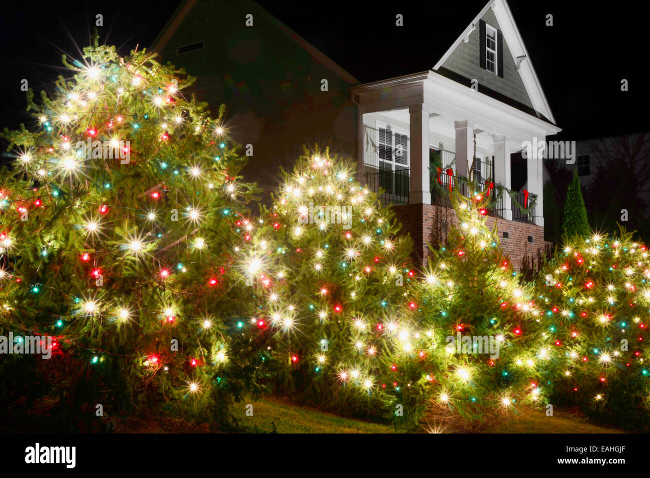 High Quality Outdoor Christmas Trees Have Been Decorated With Red, Green And White Lights  And Shot Against