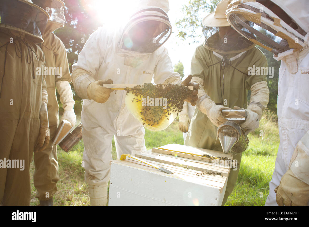 Kenyans Learn The Method Of Top Bar Beekeeping. Tree Of Life Beekeeping  Teaches This Method Of Beekeeping All Over East Africa